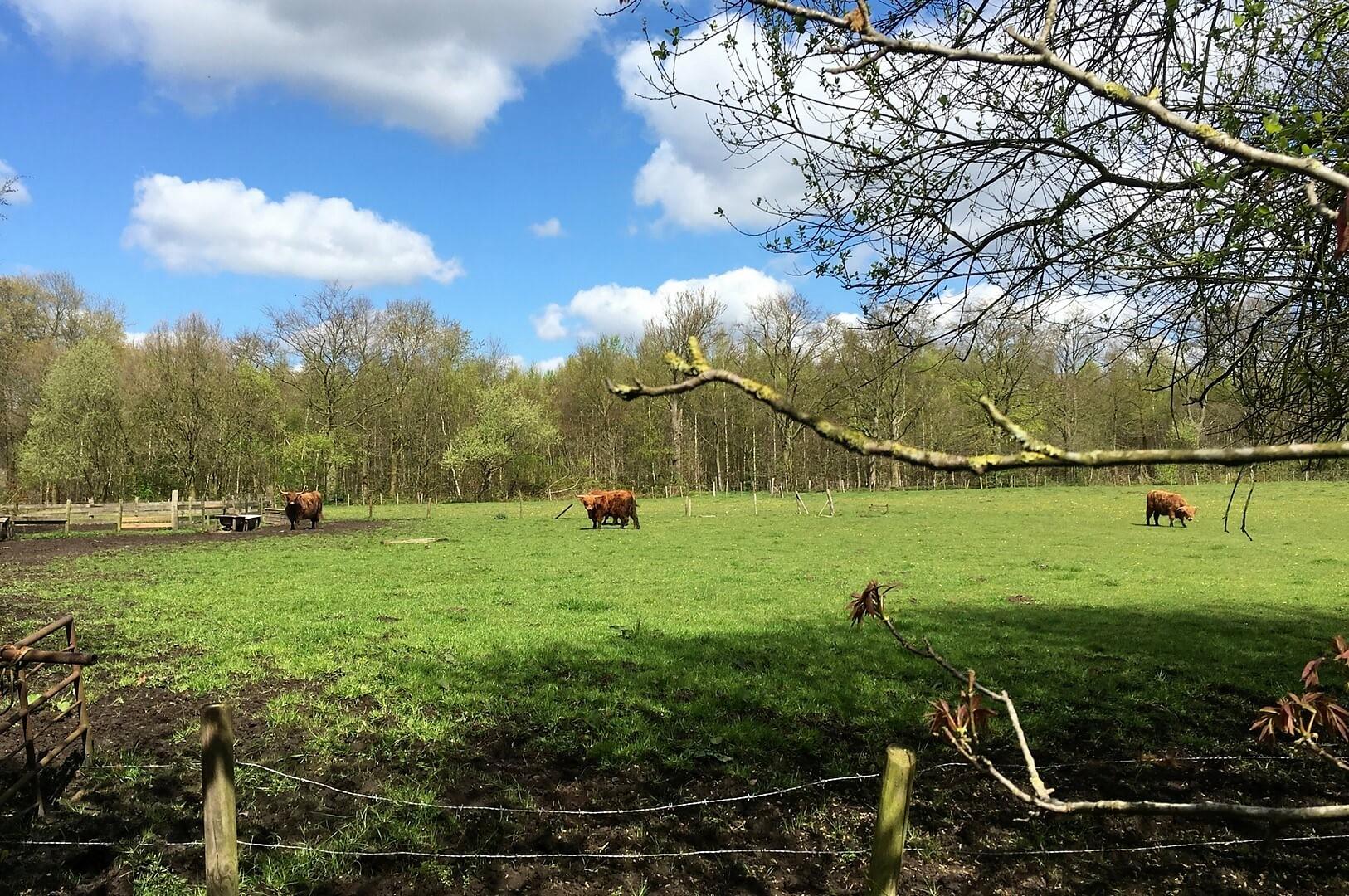 Villapparte; omgeving Noord-Brabant