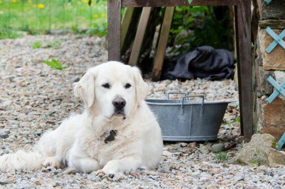 Villapparte_Lys d'avril_luxe vakantiehuizen met zwembad in Haute Vienne_6 personen_Maison Principale_honden toegestaan