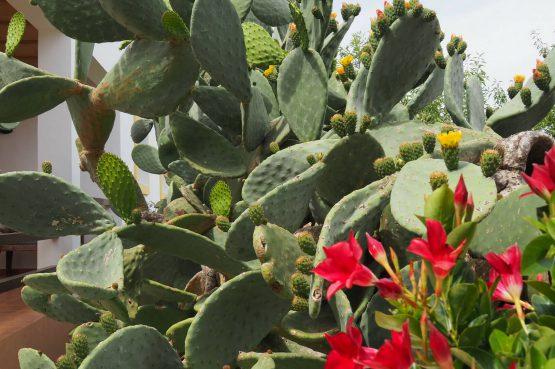 Villapparte - Casa la Vida - luxe vakantiehuis voor 6 personen met zwembad - Ibiza - bloeiende cactussen