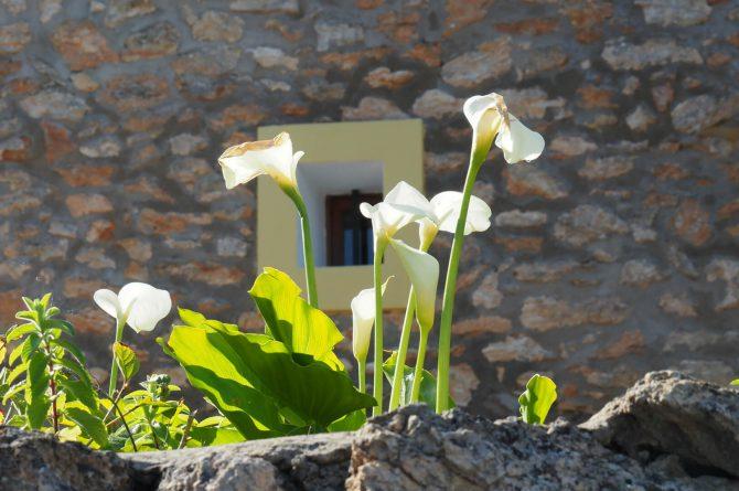 Villapparte - Casa la Vida - luxe vakantiehuis voor 6 personen met zwembad - Ibiza - sfeer buiten1