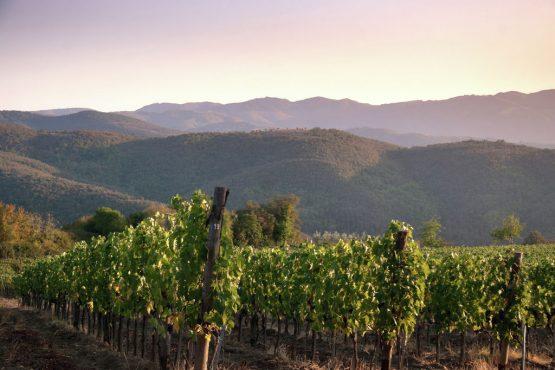 Villapparte-Belvilla-Villa Melograno Toscane Italië-luxe vakantiehuis voor 10 personen-omgeving