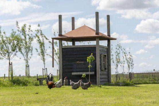 Villapparte-Natuurhuisje 37959-landelijke schapenschuur in Boksum voor 4 personen-Friesland-tuin