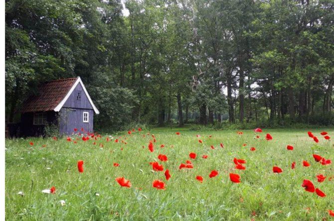 Villapparte-Natuurhuisje 50886-Vakantiehuis Scholteboerderij-2 personen-Winterswijk-midden in de natuur