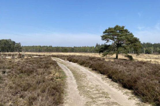 Villapparte-Scandinavische Chalet in Epe-Veluwe-luxe vakantiechalet voor 6 personen-Gelderland-natuur