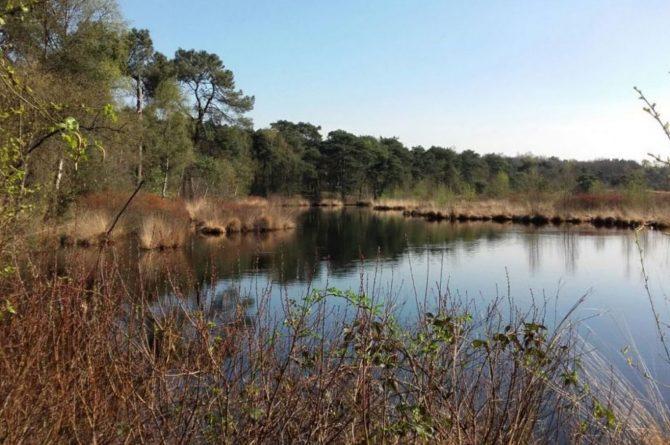 Villapparte-Natuurhuisje-Vakantiehuis Hof van Strijbeek-voor 4 personen-landelijk gelegen in Noord-Brabant-bosrijke omgeving