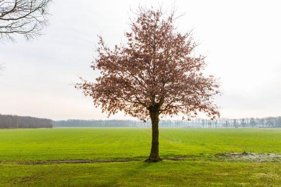 Villapparte-Natuurhuisje 56963-De Groene Parel-Gaasterland-modern vakantiehuis voor 4 personen-Friesland-geweldig uitzicht