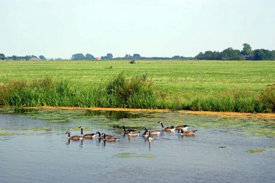 Villapparte-Belvilla-Watervilla de Roerdomp-luxe woonboot voor 6 personen-Goengahuizen-Friesland-landelijk gelegen