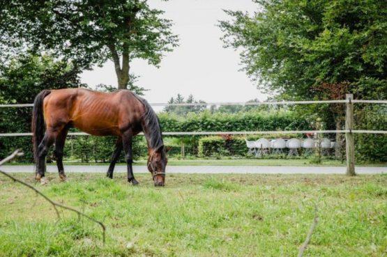 Villapparte-De Dorpswoning-De Volbloed-luxe vakantiehuis voor 12 personen-Leenderstrijp-Noord-Brabant-paardenwei